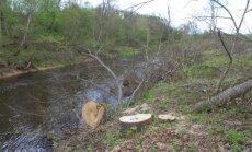 Nukirsti medžiai