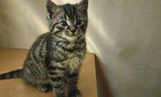 Viršuliškėse rastas katinėlis