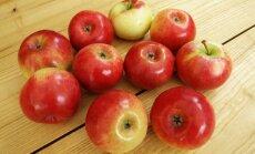 Obelų veislės sodininkų-mėgėjų sodams