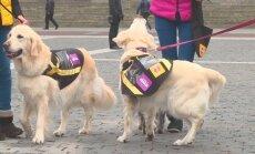 Vietoje nenustygstantys šunys buvo pasipuošę specialiais apsiaustais