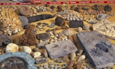 Permo-triaso išnykimo metu pražuvusių rūšių pėdsakai