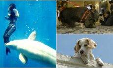 Gyvūnai, išgelbėję gyvybę