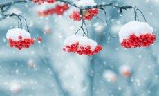 Kaip pasirūpinti sodo medeliais prieš žiemą