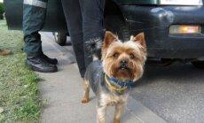 Gyvūnų teisių aktyvistai prašo kuo greičiau prieiti prie būtino gyvūnų ženklinimo