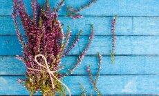 Nuo vainikų iki rudens gėrybių kompozicijų – floristikos idėjos panaudojant viržius