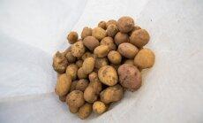 5 bulvių sandėliavimo klaidos