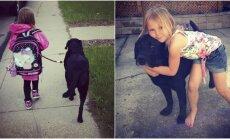 Mergaitės ir labradoro draugystė