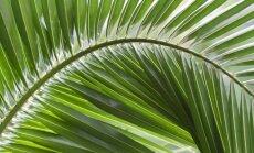 3 kambariniai augalai, kurie ir valo orą, ir saugo sveikatą