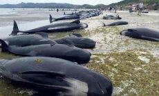 Banginiai iššoko į krantą naujojoje Zelandijoje