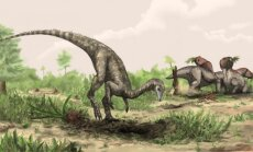 Taip galėjo atrodyti, manoma, seniausias dinozauras pasaulyje Nyasasaurus parringtoni