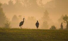 Geriausios lietuvos gamtos fotografijos – labdaringame aukcione