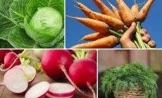 Vėlyva daržovių sėja: ką dar galite spėti pasėti