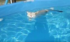 Baseine plaukiojanti katė