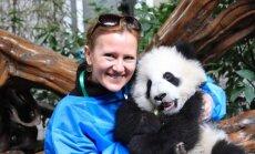 Puiki terapiją - į glėbį pasiimti minkštutę pandą / Eglės Aukštakalnytės-Hansen nuotraukos