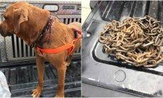 Gydytojai išlaisvino grandinėmis supančiotą šunį