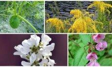 Invaziniai augalai
