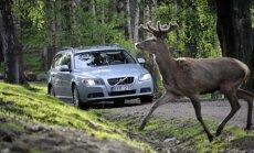 Gyvūnas kelyje