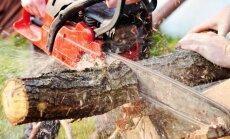 Ką daryti, jei jūsų turtą supa sausi ir supuvę medžiai