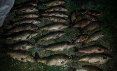 Brakonierių sugautos žuvys