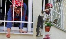 Kačiukams pastatė kopėčias į savo namus