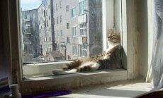 Katė (asociatyvi nuotr.)