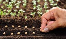 Sodinimo vietos paruošimas ir priežiūra – taisyklės, kurias turi išmokti visi daržininkai