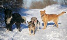 Šąlantys lauke gyvūnai