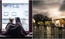Katinų draugystė