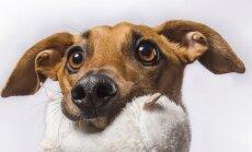 Šuo modelis