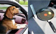 Automobilyje paliktas šuo