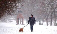 Šuo, vedžiojamas žiemą
