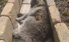 Katės ir burunduko draugystė