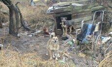Benamiai šunys