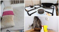 Dvylika fantastiškų patarimų, kaip išbalinti pagalves, atnaujinti stalą ir atsikratyti pelėsio