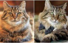 Neatspėtumėt, kiek jam metų: seniausias pasaulio katinas atrodo įspūdingai