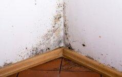 Drėgmė ir pelėsis skirtingose namų zonose – kaip su tuo susitvarkyti?