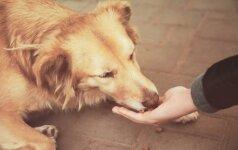 Tyrimai padeda atskleisti šunų elgesio problemas