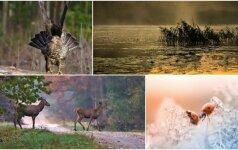 Gamtos dienoraštis: kerintys miško gyventojų portretai