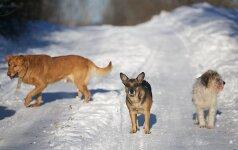 Priverstinio gyvūnų ženklinimo grimasos: gatvėse bastosi išmesti šunys