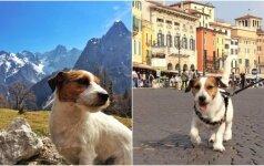 Šuneliui galima tik pavydėti: su šeimininkais aplankė 22 šalis