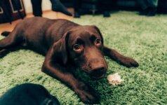 Šunų elgsenos ekspertas pataria: kaip nuraminti šunį atėjus svečiams ir pripratinti jį prie narvo