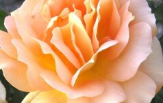 """""""Garden Style"""": kaip sodą paversti dar įspūdingesniu"""