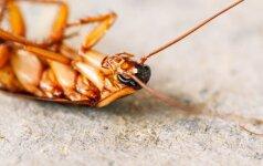 Ko bijo tarakonai?