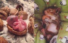 Grįžęs namo, vyras aptiko netikėtą dovaną: besilaukianti voverė paprašė jo pagalbos