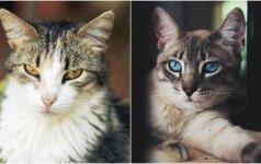 Fotografė įamžina benames kates: šios gražuolės niekam nereikalingos