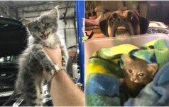 Stebinanti šuns ir katytės draugystė: neišskiriami nuo pirmo susitikimo