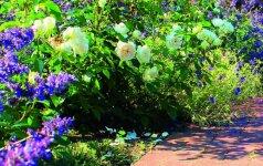 PRIEŠ IR PO: mažo sodo metamorfozės