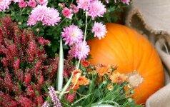 Konkursas: mano rudens derliaus gėrybės