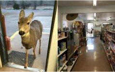 Neįprasta diena parduotuvėje: moterį aplankė nelaukti svečiai