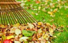 Rudeniniai lapai – kur juos dėti ir kaip panaudoti?